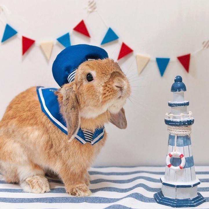 mumitan puipui conejo elegante mis gafas de pasta06