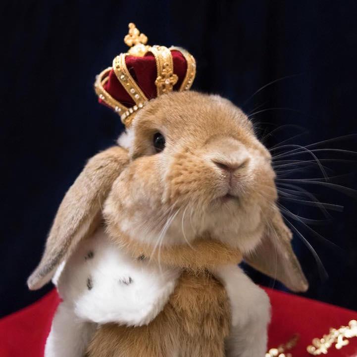 mumitan puipui conejo elegante mis gafas de pasta07