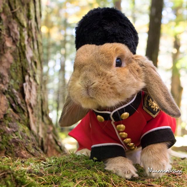 mumitan puipui conejo elegante mis gafas de pasta08