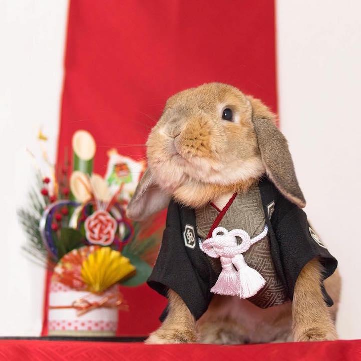 mumitan puipui conejo elegante mis gafas de pasta09