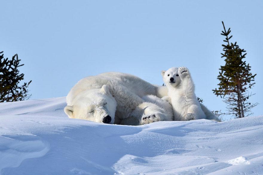 fotos de animales muy divertidas mis gafas de pasta oso polar