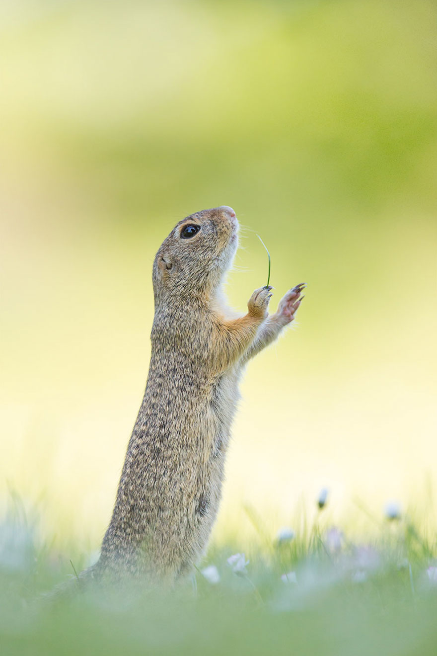 fotos de animales muy divertidas mis gafas de pasta rezando