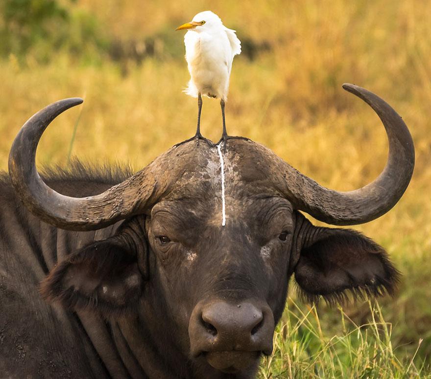 fotos de animales muy divertidas mis gafas de pasta oh oh