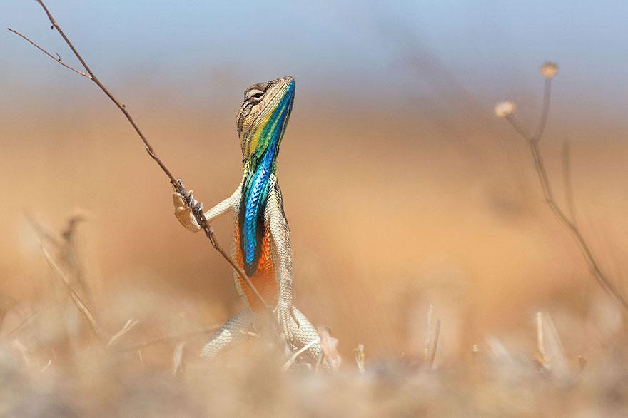 fotos de animales muy divertidas mis gafas de pasta yeah