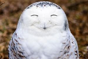 fotos divertidas animales mis gafas de pasta señor feliz