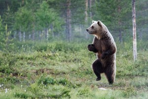 fotos divertidas animales mis gafas de pasta oso andando