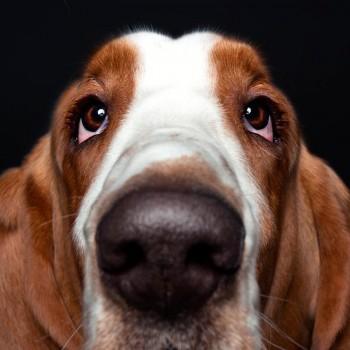 alexander-khoklov-perros-mis-gafas-de-pasta-destacado