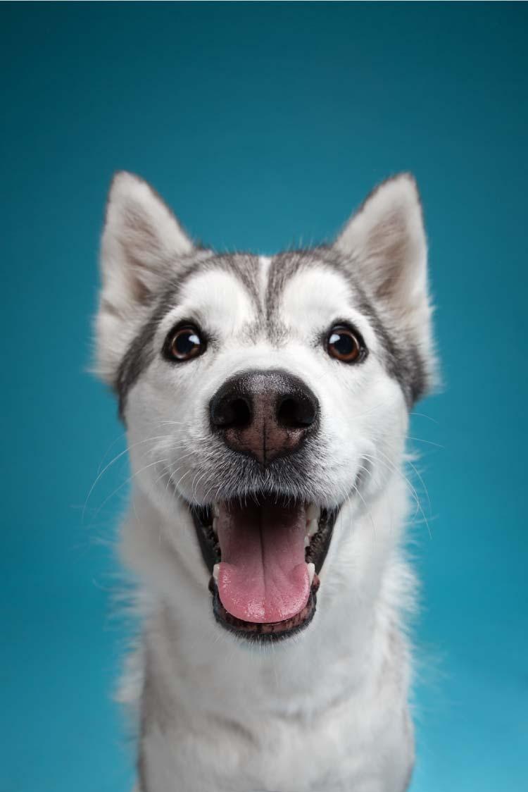 alexander-khoklov-perros-mis-gafas-de-pasta01