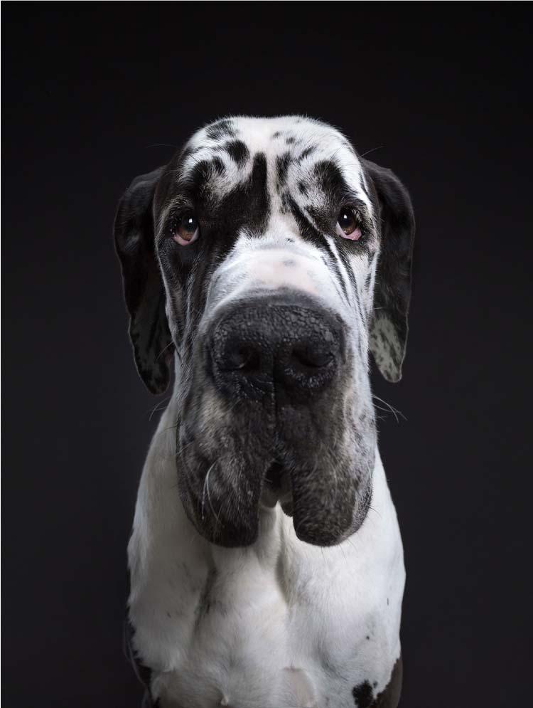 alexander-khoklov-perros-mis-gafas-de-pasta16