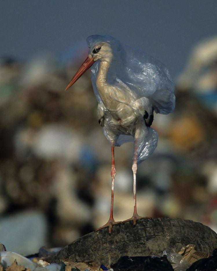 crisis del plastico national geographic mis gafas de pasta03