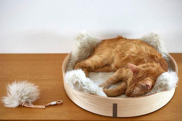 tuft paw cat muebles para gatos mis gafas de pasta02
