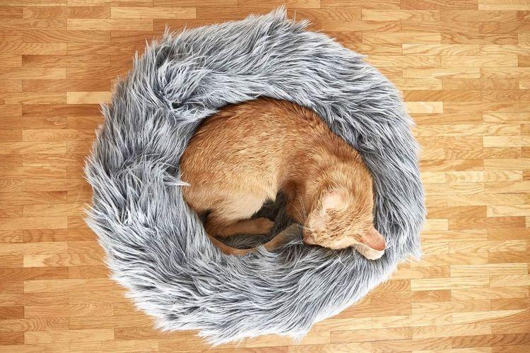 tuft paw cat muebles para gatos mis gafas de pasta03