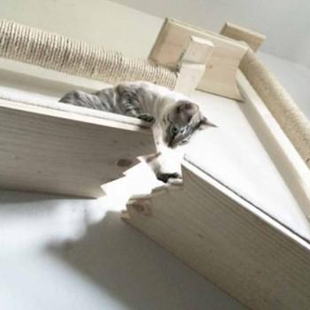 muebles-gatos-mis-gafas-de-pasta-destacado
