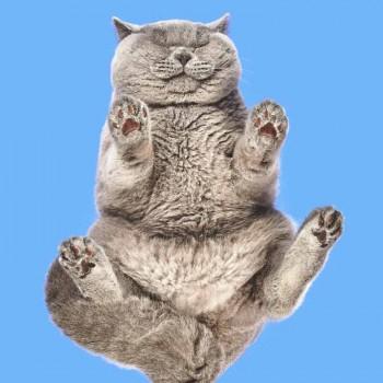 gatos-desde-abajo-mis-gafas-de-pasta-destacado